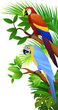 Parrot bird Stock Image
