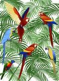 Parrot bird Stock Photos