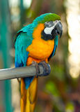 Parrot bird Stock Images