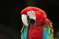 Parrot bird Stock Photos