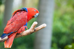 Parrot bird Stock Photo