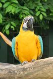 Parrot Bird. Waiting for Food in the day Stock Image