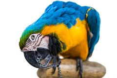 Parrot  bird  animal Stock Image