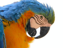 Parrot bird animal  head Royalty Free Stock Photos