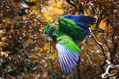 Parrot bird on branch, parrot. On branch royalty free stock photography