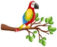 Parrot bird on the branch. Illustration Stock Photo
