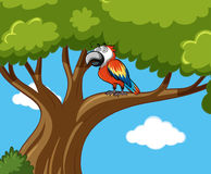 Parrot bird on the branch. Illustration Royalty Free Stock Images