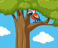 Parrot bird on the branch. Illustration Stock Images