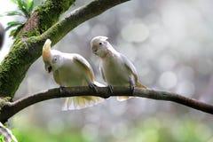 Parrot bird on branch, white parrot. White parrot on branch, bird on branch stock image
