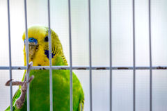 Parrot bird cage Royalty Free Stock Photo