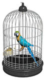 Parrot bird in a cage Stock Photos