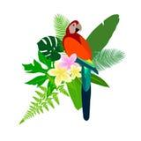 Parrot bird colour feather. Banana coconut mango Royalty Free Stock Photo