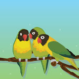 Parrot bird group. Illustration abstract parrot bird group sky green color background fly wildflower element graphic Stock Images