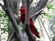 Parrot, Bird, Macaw, Beautiful Bird Stock Photography
