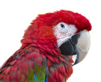 Parrot bird macaw portrait macro Stock Image