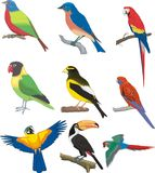 Parrot bird multicolored Royalty Free Stock Image