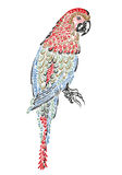 Parrot bird with ornament pattern Royalty Free Stock Images