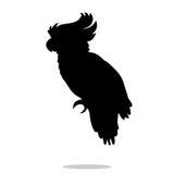 Parrot bird pet black silhouette animal Royalty Free Stock Images