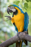 Parrot Bird Pointing Stock Image