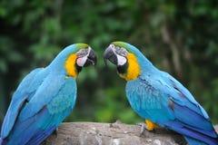 Parrot bird (Severe Macaw) royalty free stock photos