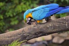 Parrot bird Royalty Free Stock Image