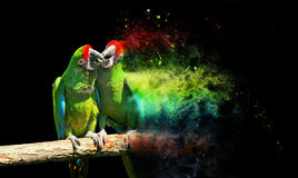 Parrot bird (Severe Macaw) Stock Photos
