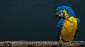 Parrot bird sitting on a branch stock image