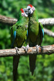 Parrot bird sitting on the branch stock photos