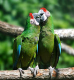 Parrot bird sitting on the branch royalty free stock photos