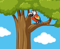 Parrot bird on the tree branch. Illustration Royalty Free Stock Image