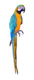 Parrot bird. Tropical white colorful fauna nature pet exotic Royalty Free Stock Image