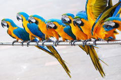 Parrot birds. Standing in a row