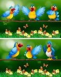 Parrot birds in flower garden vector illustration