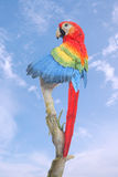 Parrot on Branch Royalty Free Stock Photos