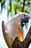 Parrot on a branch Royalty Free Stock Images