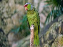 Parrot on a branch .parrot on a branch royalty free stock image