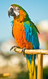 Parrot on branch Royalty Free Stock Image