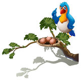 A parrot at the branch of a tree with a nest Royalty Free Stock Photography