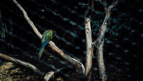 Parrot and branch Royalty Free Stock Images