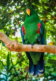 A Parrot in Butterfly Gardens. VICTORIA, BC - JULY 13, 2017 - A parrot at The Victoria Butterfly Garden on July 13th, 2017, in Victoria, on Vancouver Island royalty free stock photo