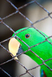 Parrot and Cage Royalty Free Stock Image