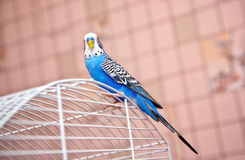 Parrot on a cage Stock Photo