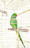 Parrot in the cage Royalty Free Stock Image