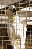 Parrot in cage stock photos