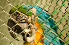 Parrot in the cage Royalty Free Stock Photo