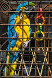 Parrot in a cage Stock Image