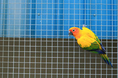 Parrot on the cage. Detail of Parrot on the cage Stock Photos