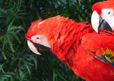 Parrot in cancun. April 2005 stock images