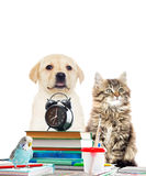 Parrot ,cat, dog and books. And an alarm clock Stock Photography