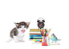 Parrot, cat and school stationery Stock Photos